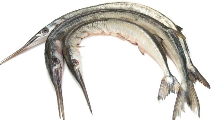 Needle-fish