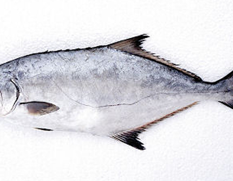 Leerfish